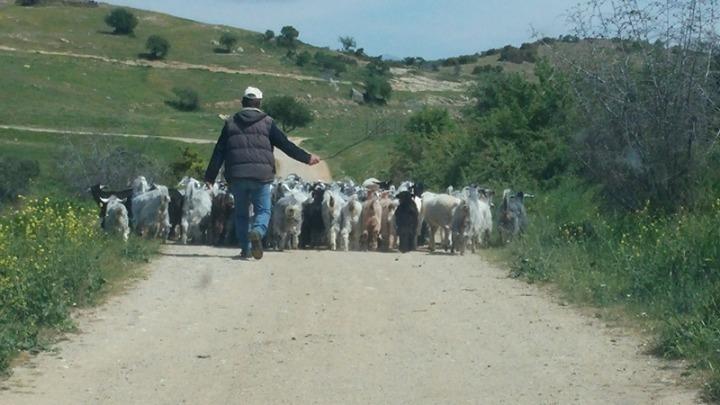 Έρχεται νομοσχέδιο για την ενίσχυση της κτηνοτροφίας – Τι θα περιλαμβάνει