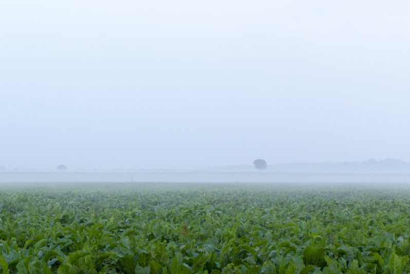 Fog above a green field