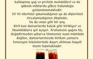 HACAMATLA ALINAN KANIN ANALİZİ