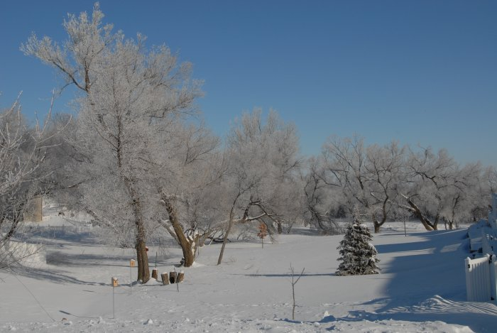 January Winter Pictures