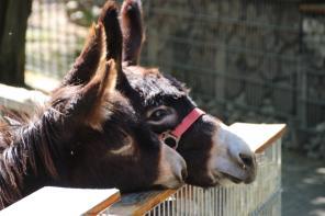 Nichts zu sehen: Die Esel   Foto: Elmar Herding