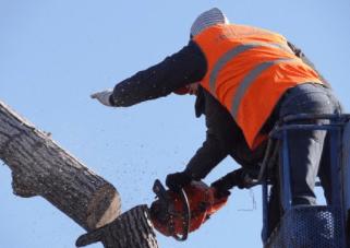 professional tree cutting