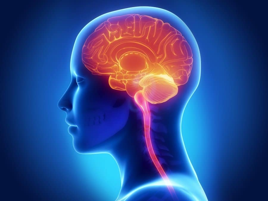 Glycine In Collagen promotes brain function