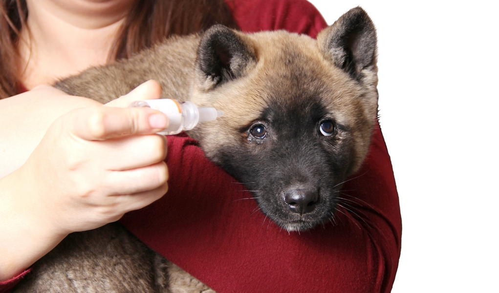 Can I Use Refresh Eye Drops On My Dog?