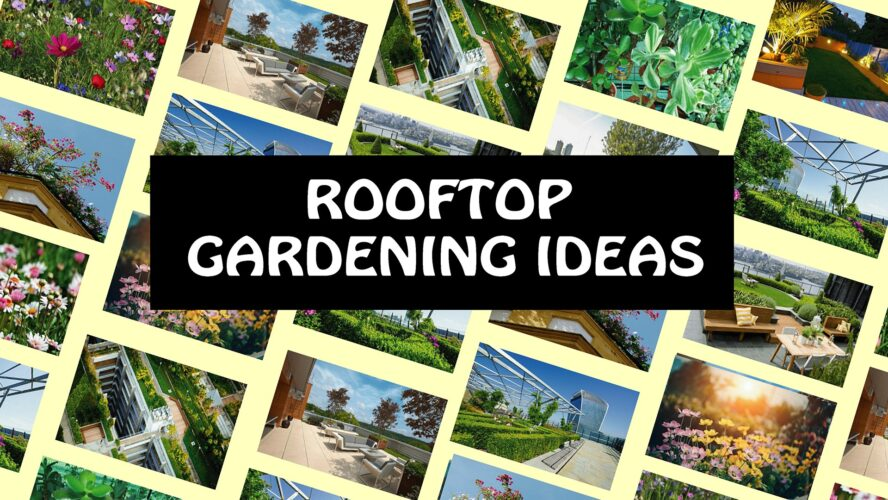 ROOFTOP GARDENING IDEAS | TREES FOR SMALL ROOFTOP GARDENS, small trees fro garden, trees for small, trees for small garden,