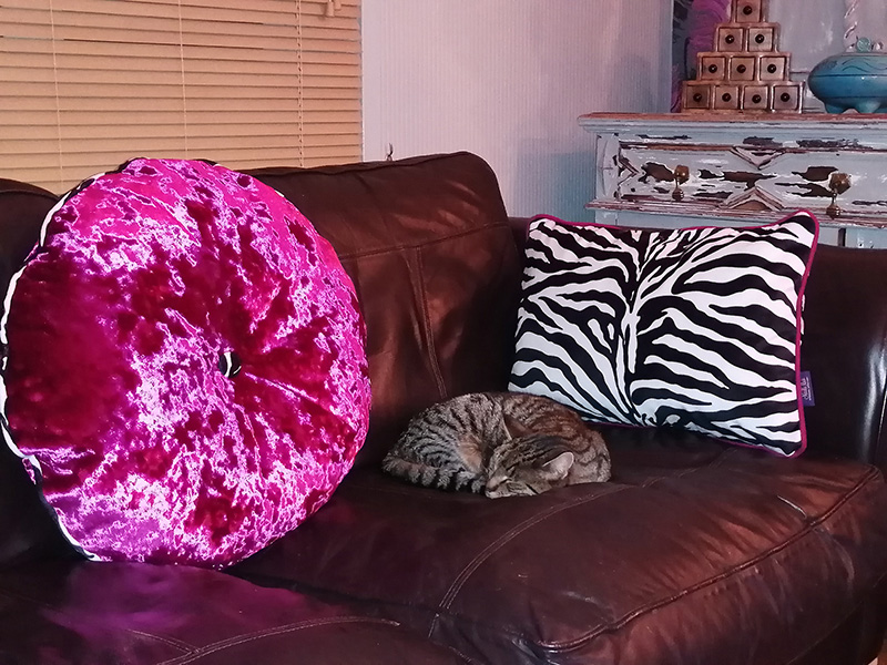 Cushions_&_Cat