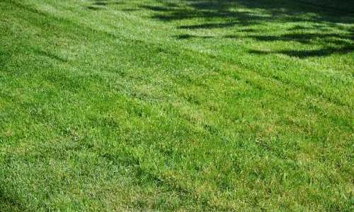 When Should I Fertilize My Lawn?