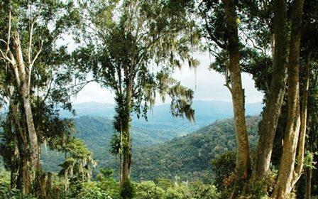 Nicaragua Coffee: Meet PRODECOOP