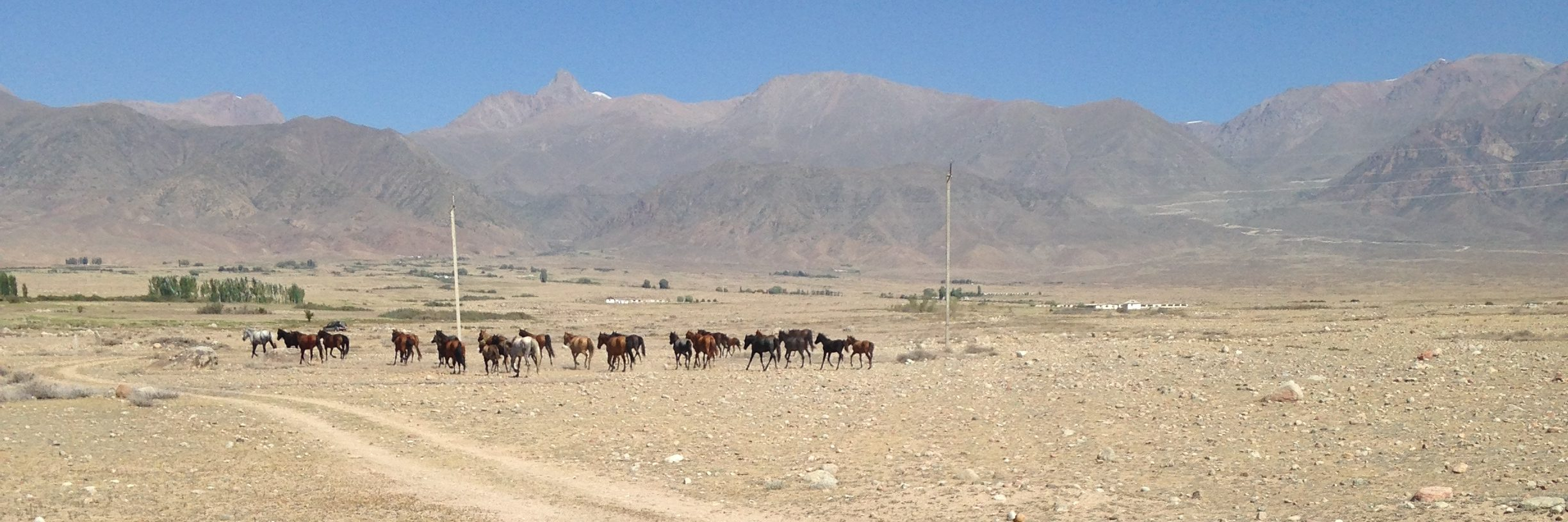 horses and a backdrop of mountains