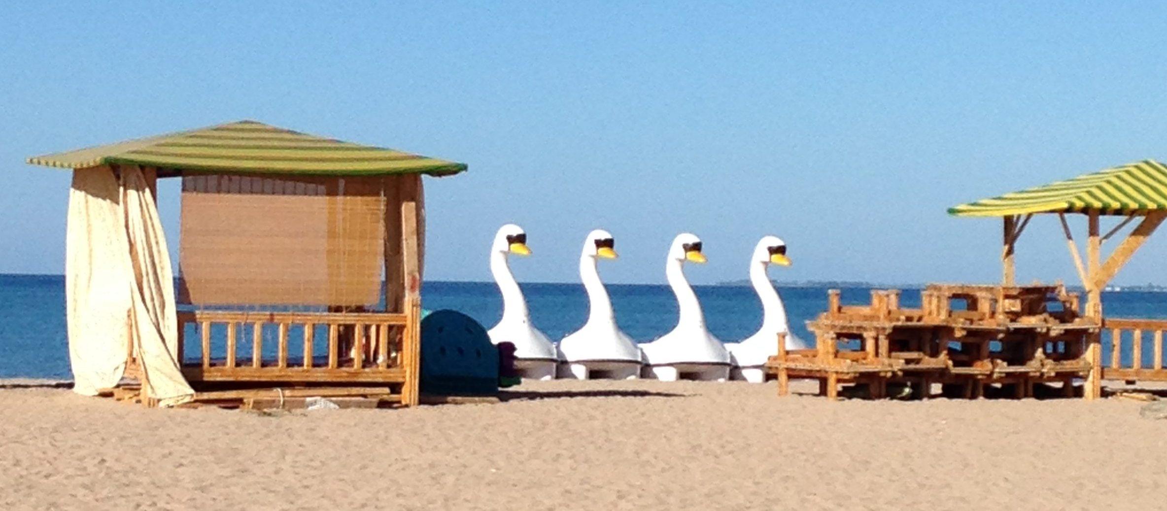 swan boats on a beach