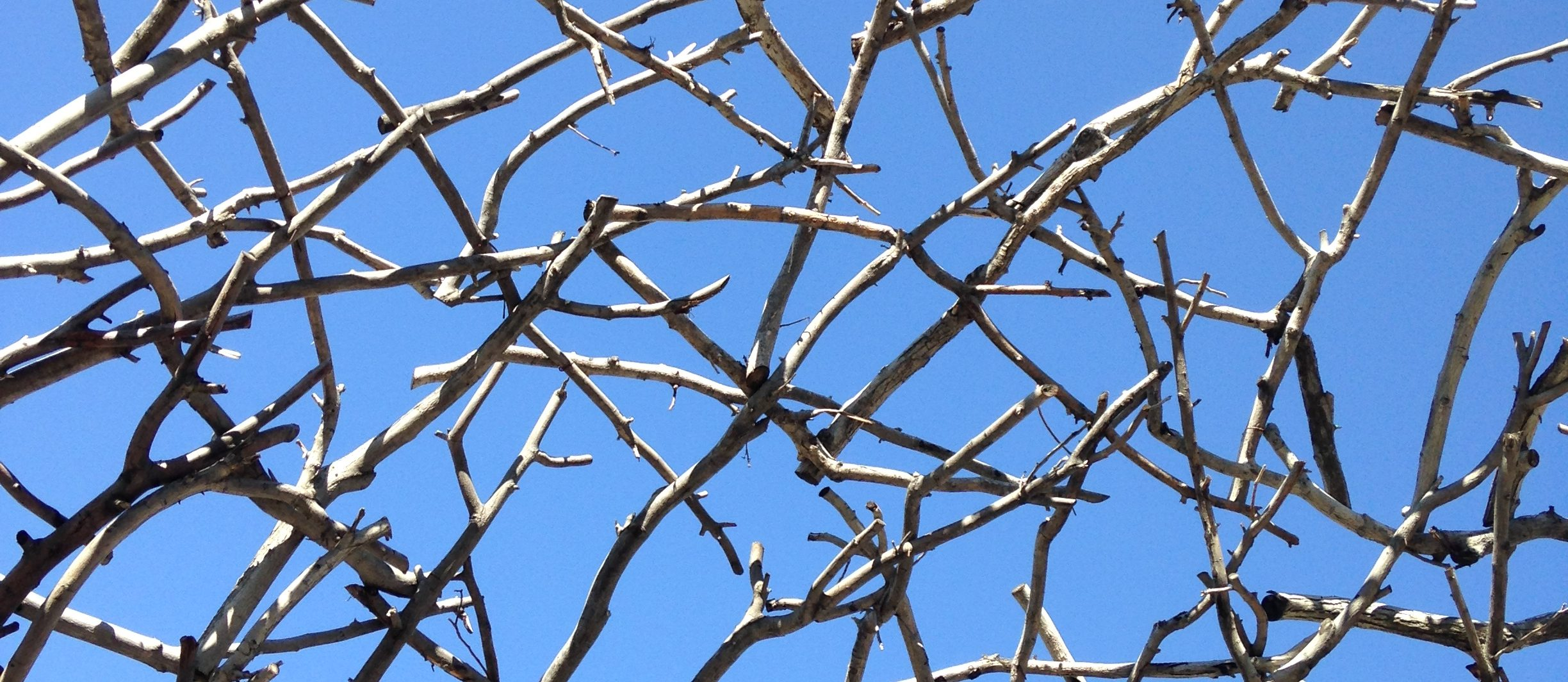 A thicket of sticks and a blue sky