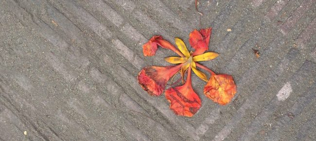 pavement and a flower