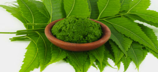 Neem Products Neem Products Suppliers Neem Extracts Products Neem Products Benefits Neem