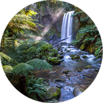 Science Waterfall Forest