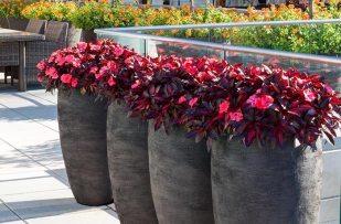 Winston Flowers Garden Design12
