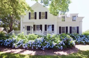 A view of the hydrangea garden.