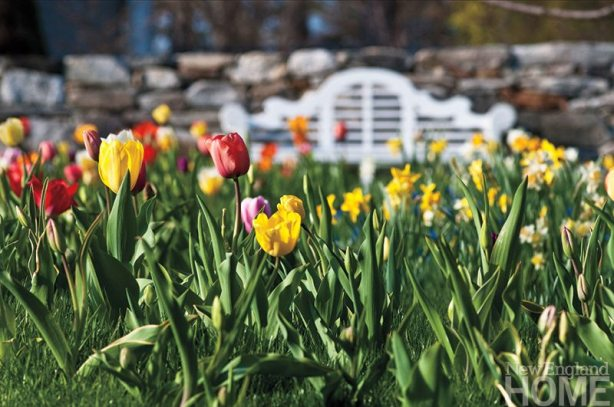 The islands surrounding the trees are home to hundreds of bulbs that burst into color for weeks on end every spring.