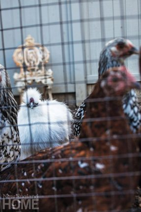 Raising chickens and growing fruits and vegetables contribute to the property's down-on-the-farm vibe.