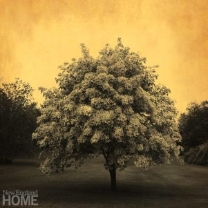 Apple Tree (2010) Tenneson used gold leaf to produce mixed-media images of astonishing beauty.