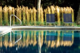 Tall ornamental grasses act as kinetic sculptures