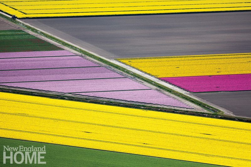 Alex MacLean_Diagonal Flower Fields