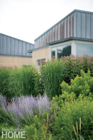 Gregory Lombardi contemporary landscape grasses