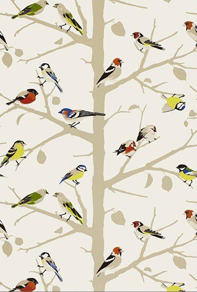 bird wallpaper f schumacher