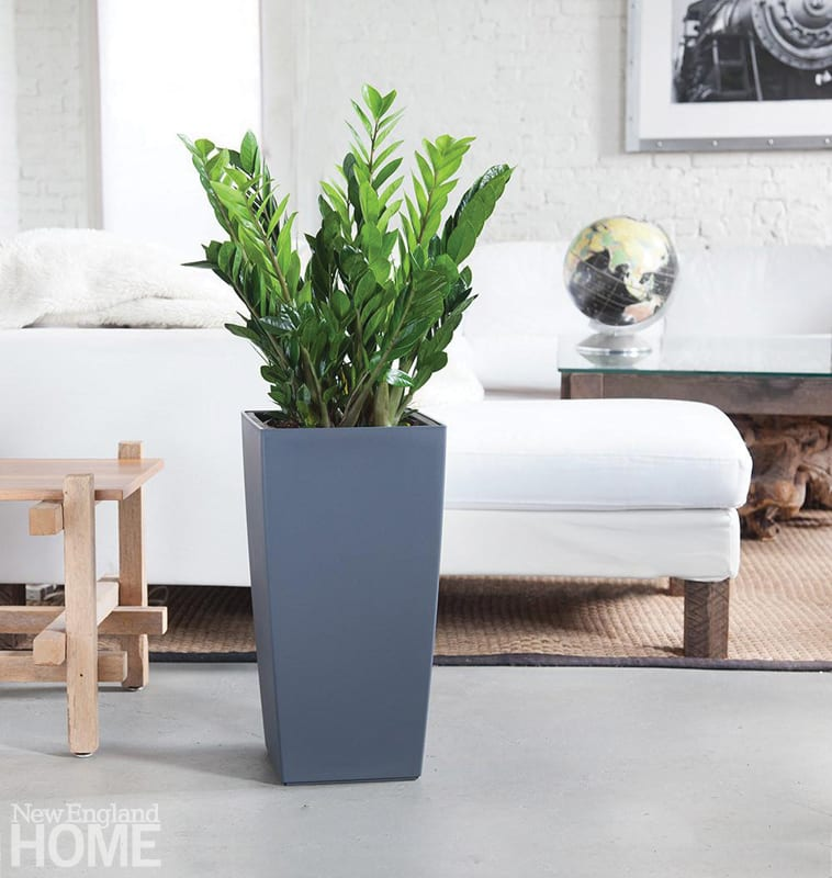 A tall gray container with a green plant. In the background is a white sofa.