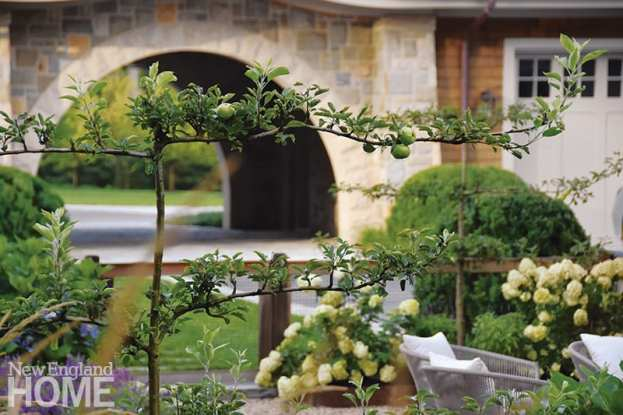 """A terraced ledge planted with Tardiva hydrangeas, which Parker lovingly describes as """"shaggy dogs,"""" overlooks the pool house and infinity pool. Natural variation in the ledge-filled landscape and multiple buildings allowed Parker to design a variety of outdoor spaces for the active family, but also required solid discipline and organization to align her design along the axial lines of the main house."""