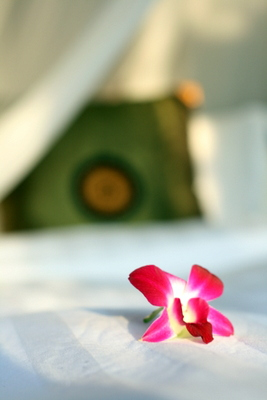 Pink flower on a bed—Luang Prabang, Laos