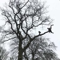 Removing a tall oak