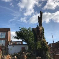 Tall Tree Removal - last bits