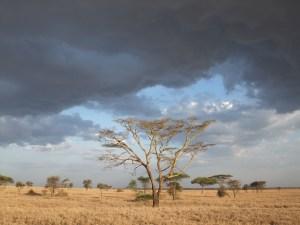 Serengeti Storm Brewing