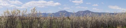 Springtime in Boulder County