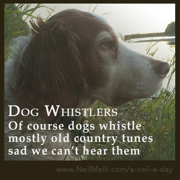 Of course dogs whistle mostly old country tunes sad we can't hear them