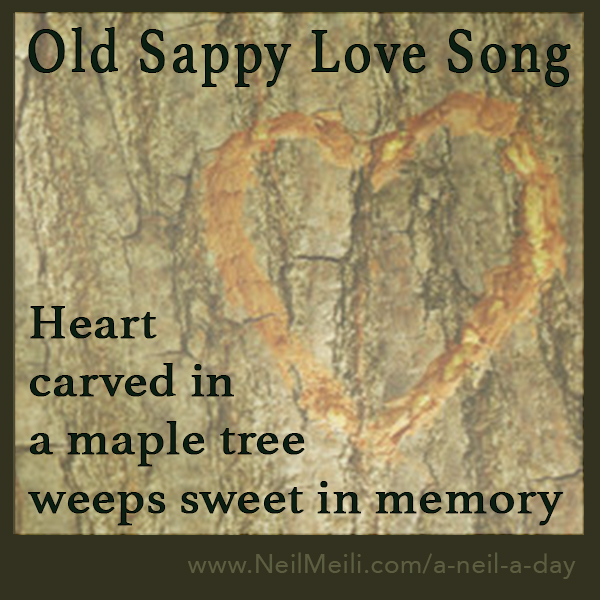 Heart carved in  a maple tree weeps sweet in memory