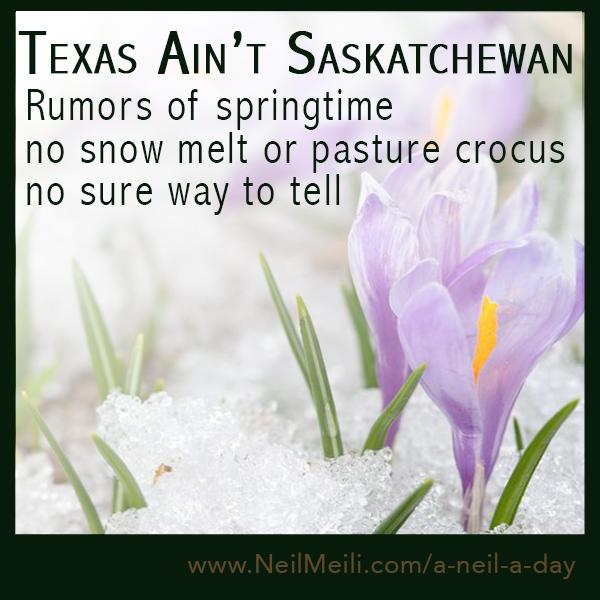 Texas Aint Saskatchewan  Rumors of springtime no snow melt of pasture crocus no sure way to tell
