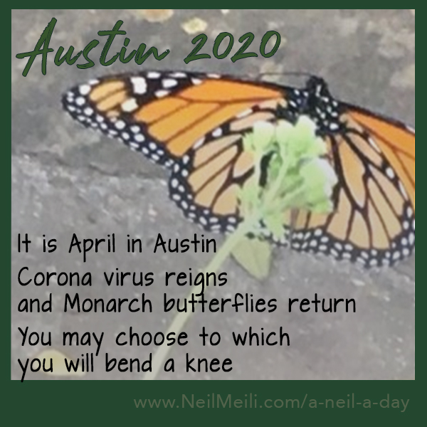 It is April in Austin Corona virus reigns and Monarch butterflies return You may choose to which you will bend a knee