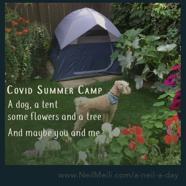 A dog, a tent  some flowers and a tree  And maybe you and me