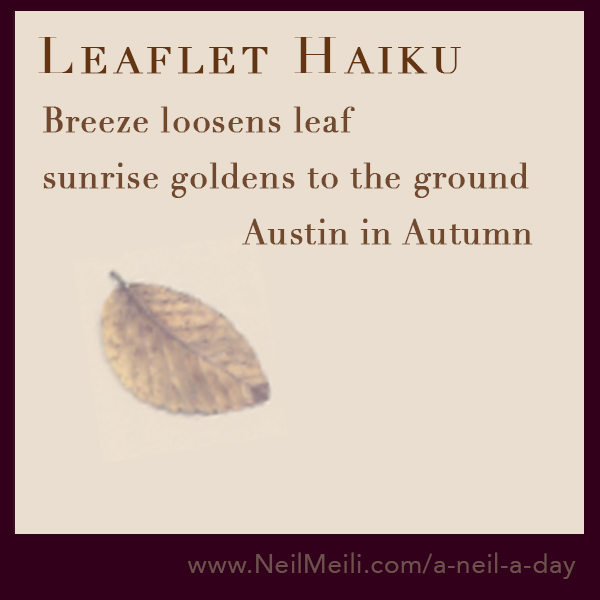 Breeze loosens leaf  sunrise goldens to the ground                     Austin in Autumn