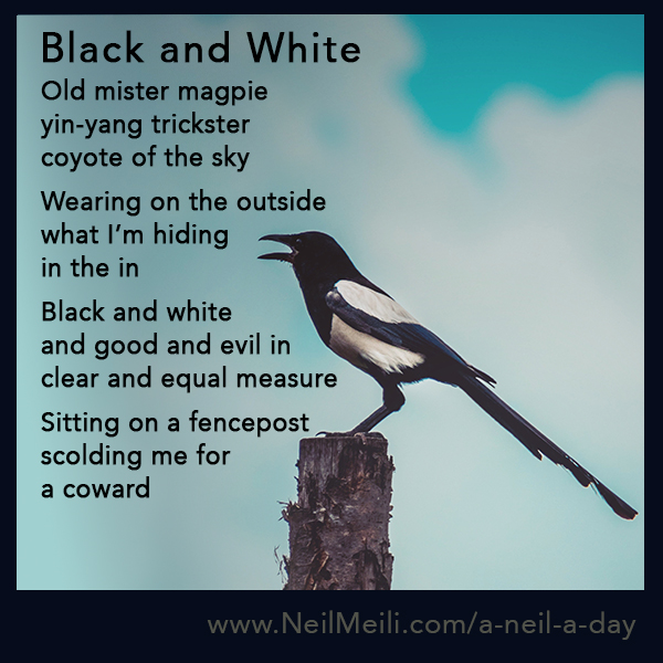 Old mister magpie yin-yang trickster coyote of the sky   Wearing on the outside what I'm hiding in the in  Black and white and good and evil in clear and equal measure   Sitting on a fencepost scolding me for a coward