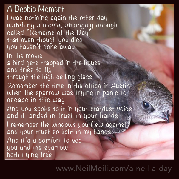"I was noticing again the other day watching a movie, strangely enough called ""Remains of the Day"" that even though you died you haven't gone away  In the movie a bird gets trapped in the house and tries to fly through the high ceiling glass  Remember the time in the office in Austin when the sparrow was trying in panic to escape in this way  And you spoke to it in your stardust voice and it landed in trust in your hands  I remember the windows you flew against and your trust so light in my hands  And it's a comfort to see you and the sparrow both flying free"