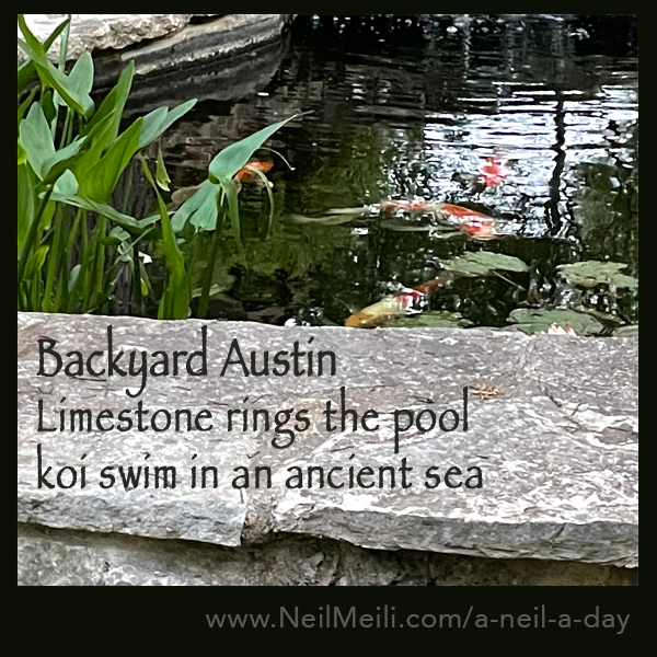 Limestone rings the pool koi swim in an ancient sea