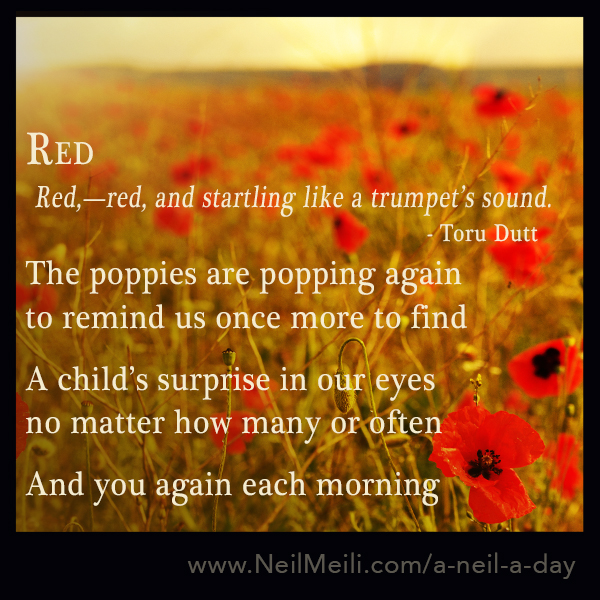 Red,—red, and startling like a trumpet's sound. - Toru Dutt  The poppies are popping again to remind us once more to find   A child's surprise in our eyes no matter how many or often  And you again each morning