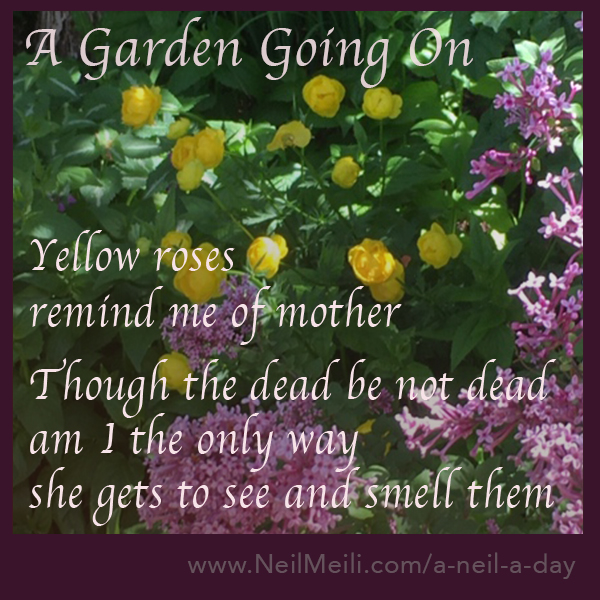 Yellow roses remind me of mother Though the dead be not dead am I the only way  she gets to see and smell them