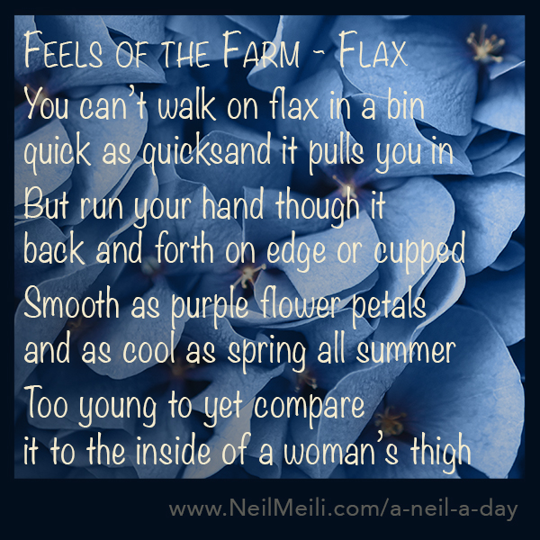You can't walk on flax in a bin quick as quicksand it pulls you in  But run your hand though it back and forth on edge or cupped  Smooth as purple flower petals and as cool as spring all summer  Too young to yet compare it to the inside of a woman's thigh