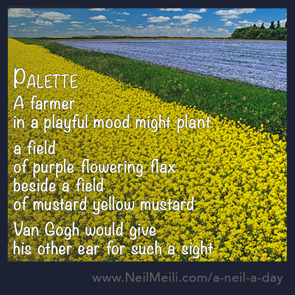 A farmer  in a playful mood might plant  a field  of purple flowering flax beside a field of mustard yellow mustard  Van Gogh would give his other ear for such a sight
