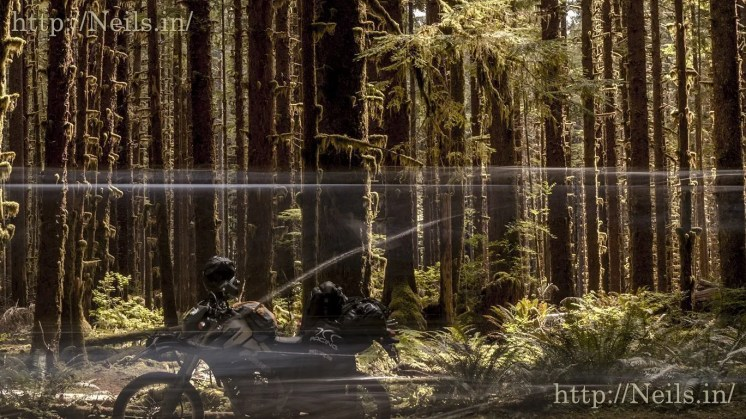 Car blurred by as people frantically drive into the Hoh Rainforest National Park