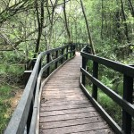 Staycation 2020 – Day Five – California Country Park