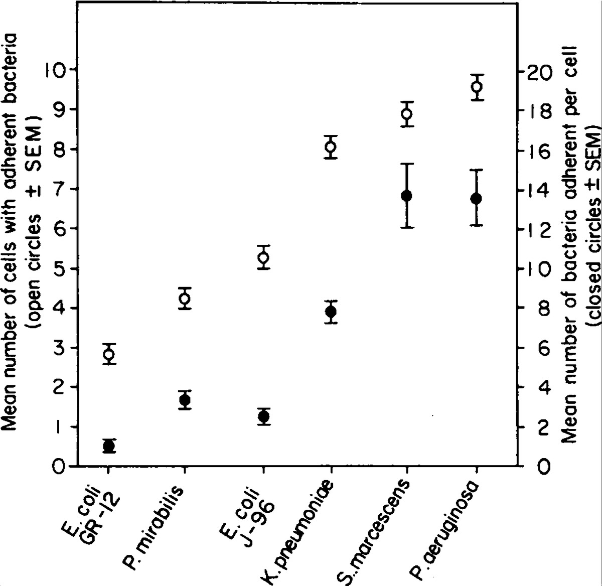 Bacterial Adherence To Bladder Uroepithelial Cells In Catheter Associated Urinary Tract